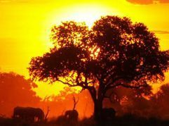 Safaris ALBATROS group